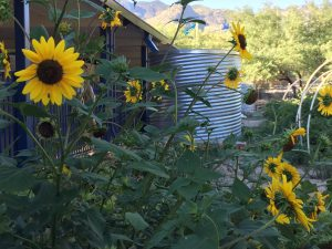 Photo of sunflowers in garden